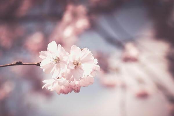 タオルの色 ピンク ギフト